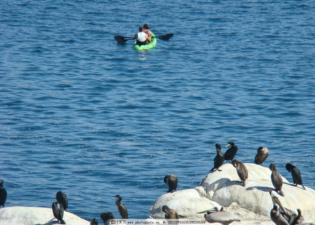 加州海滩 人与自然 海滩 小鸟 水上鸟 野生动物 鸟类 生物世界 摄影