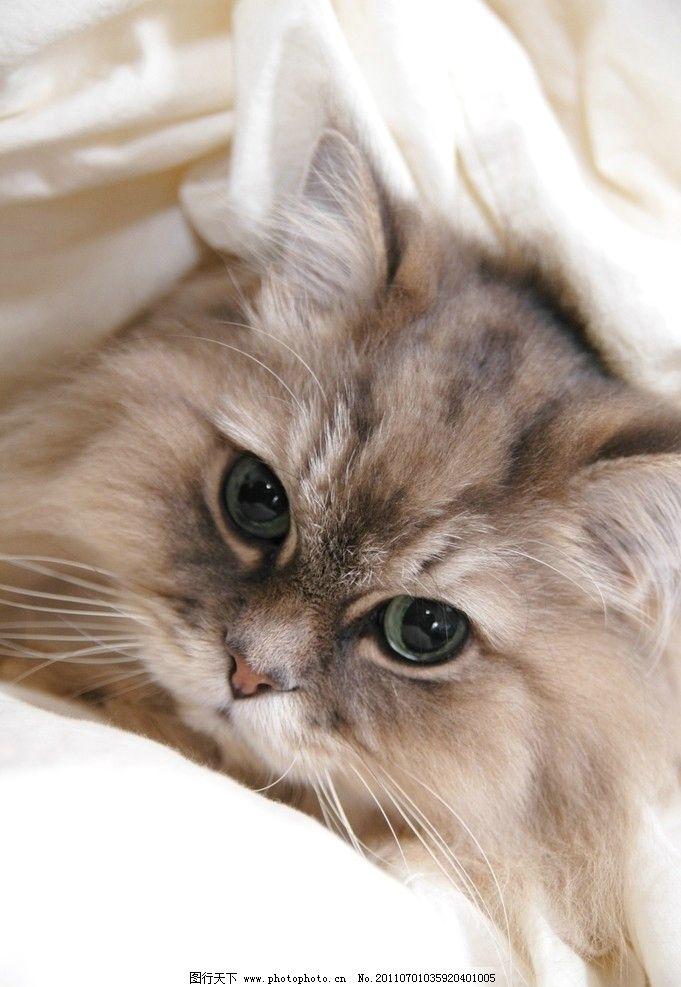 睡觉的猫 可爱的猫咪 猫咪