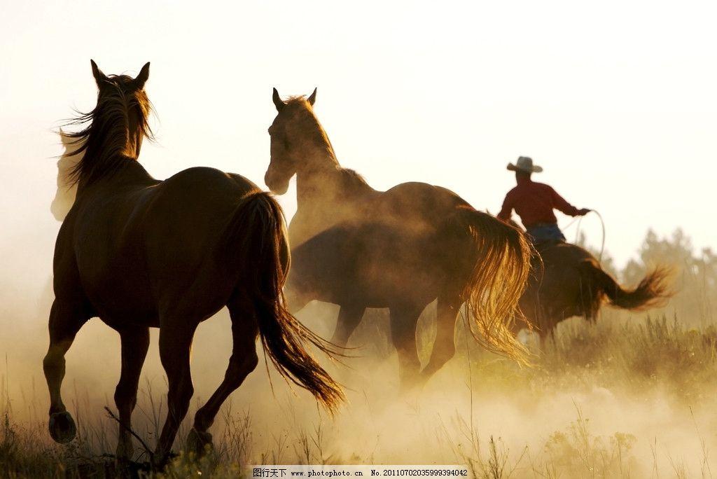 奔腾的马匹