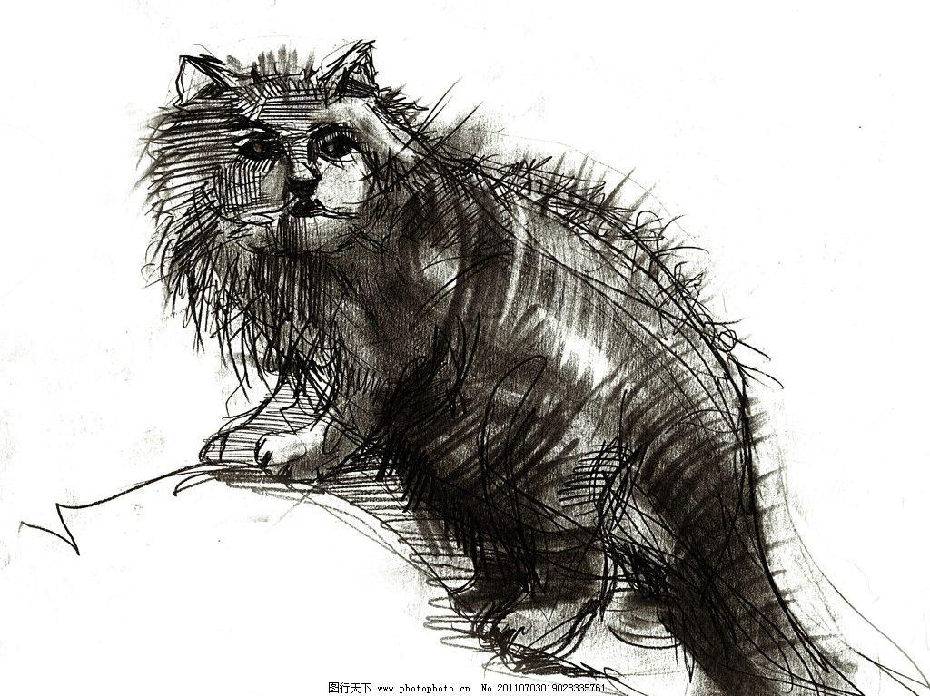 手绘线条小猫 手绘 小猫 素描 速写 线条 线稿 高清 黑白 绘画书法