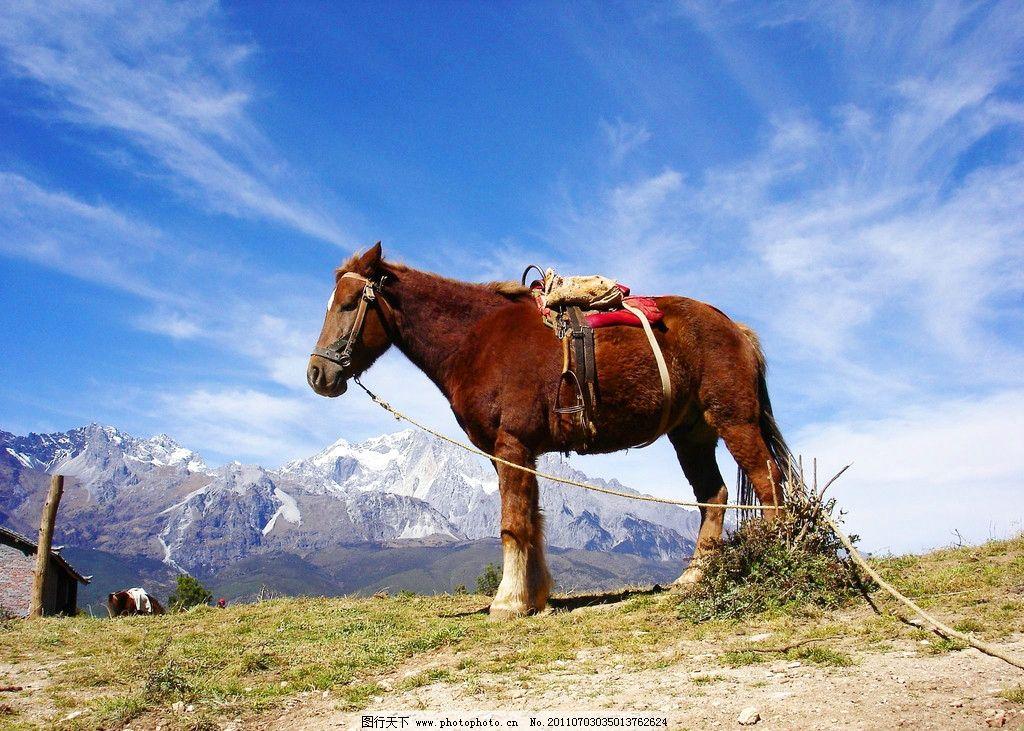 蓝天白云 梅里雪山 雪山 积雪 蓝天 白雪皑皑 马 骏马 马匹 野生动物