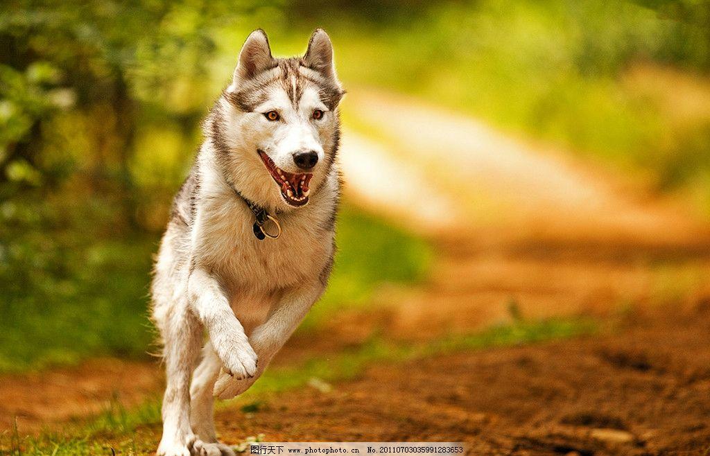 动物在森林里奔跑