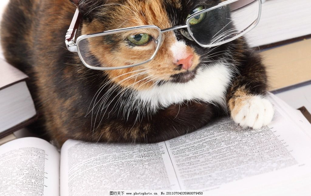 猫咪 花猫 小猫 家禽 懒猫 宠物猫 家猫 猫猫 动物 动物世界