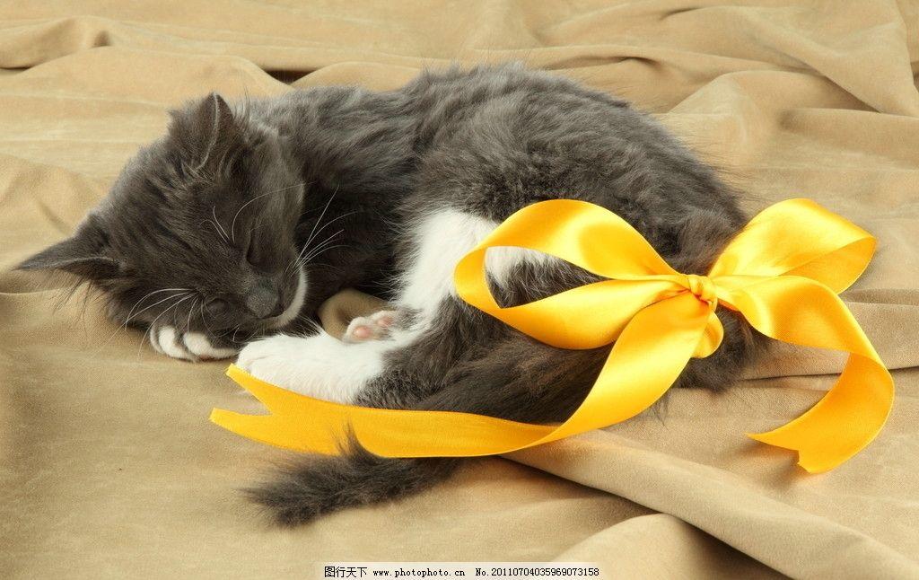 猫咪 花猫 小猫 小猫看书 书本 苹果 青苹果 家禽 懒猫 宠物猫