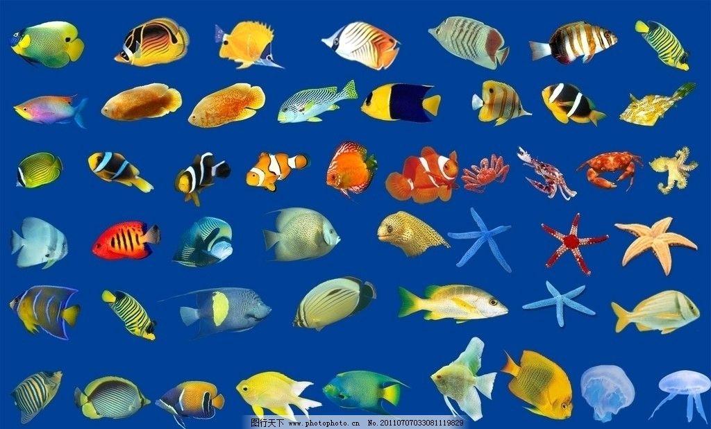 鱼素材 漂亮鱼 海星 水母 海底世界 源文件