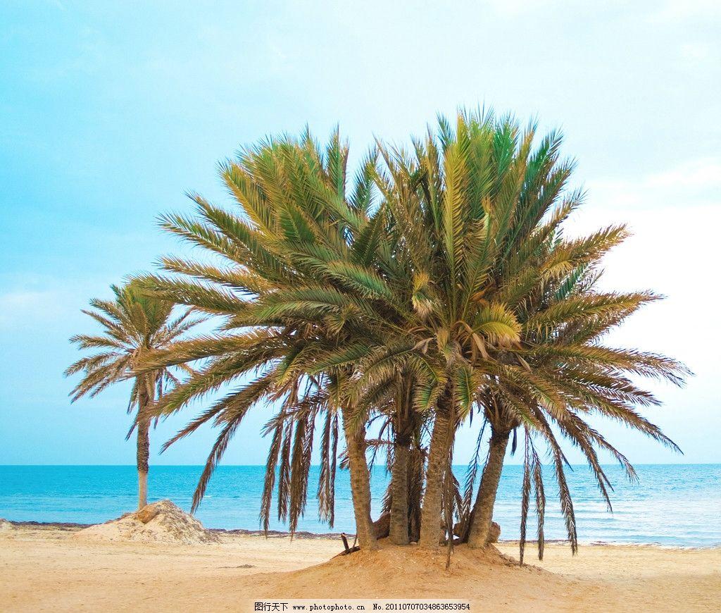 海洋沙滩椰子树图片_自然风景_自然景观_图行天下图库