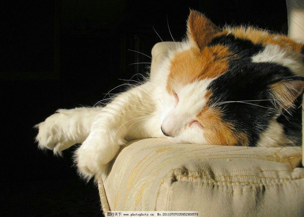 小猫 动物摄影 宠物 猫 可爱的猫 家猫 猫咪 小猫图片 家禽家畜 生物