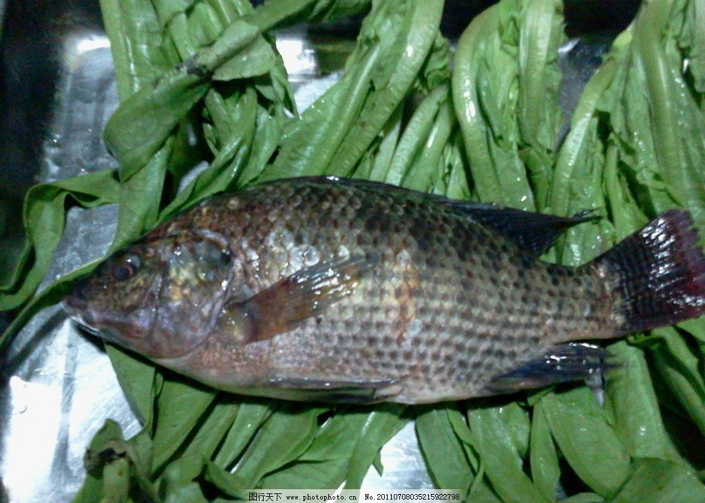 壁纸 动物 鱼 鱼类 1024_731