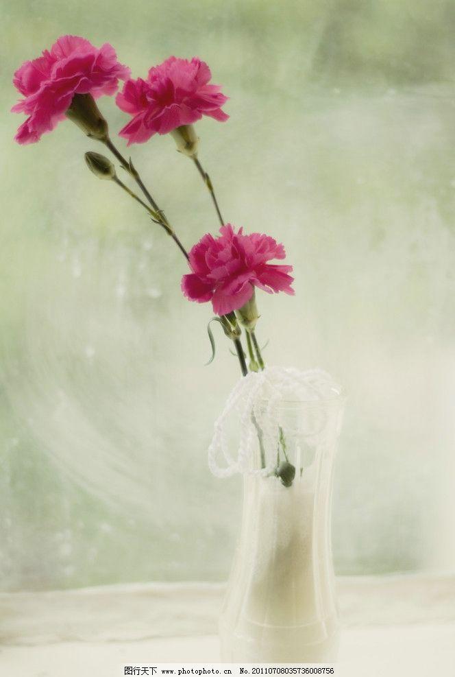 康乃馨 鲜花 花朵 小花 树叶 大自然 风景 草地 大花 红花 鲜艳 百花