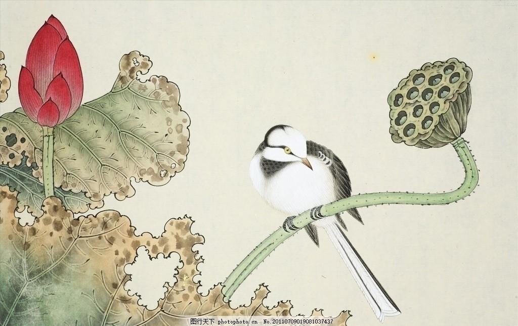 莲蓬 工笔画 中国元素 国画 荷花 绘画书法 文化艺术 设计 300dpi jpg