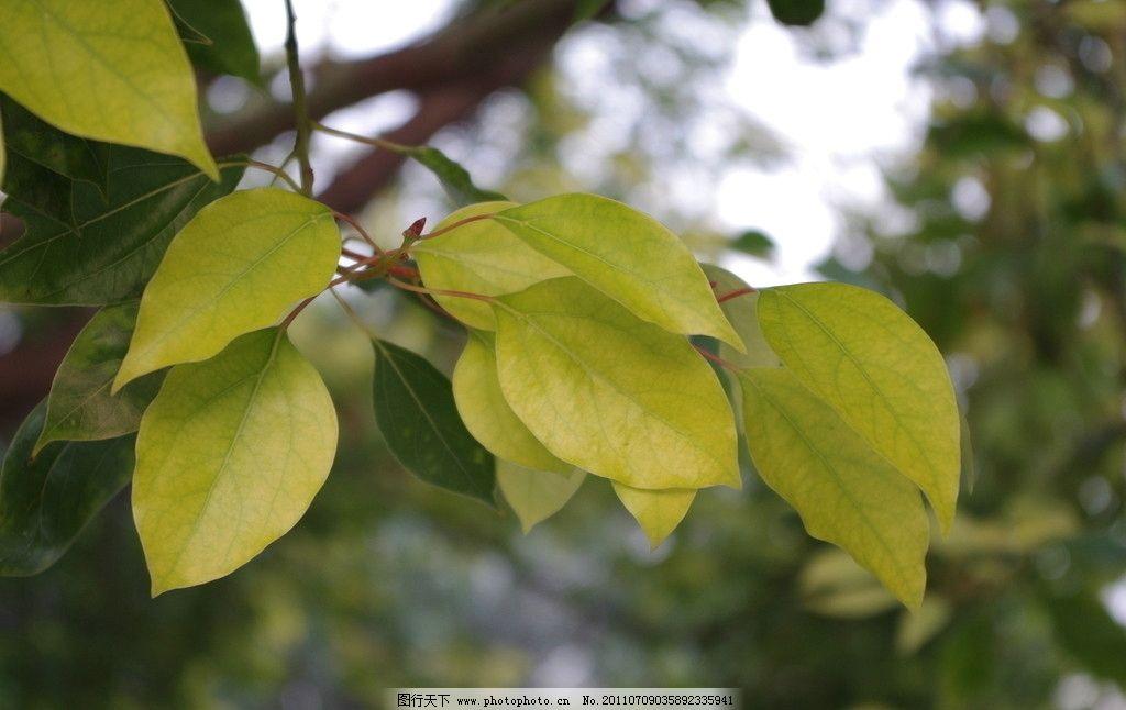 树叶 绿叶 自然 绿色 植物 植被 花草 绿叶背景 树木树叶 生物世界