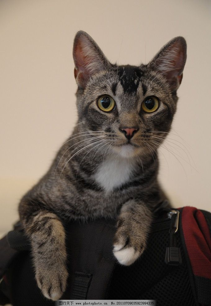 壁纸 动物 猫 猫咪 小猫 桌面 680_987 竖版 竖屏 手机
