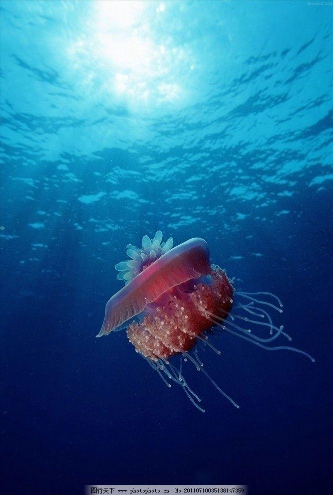奇异海中动物图片