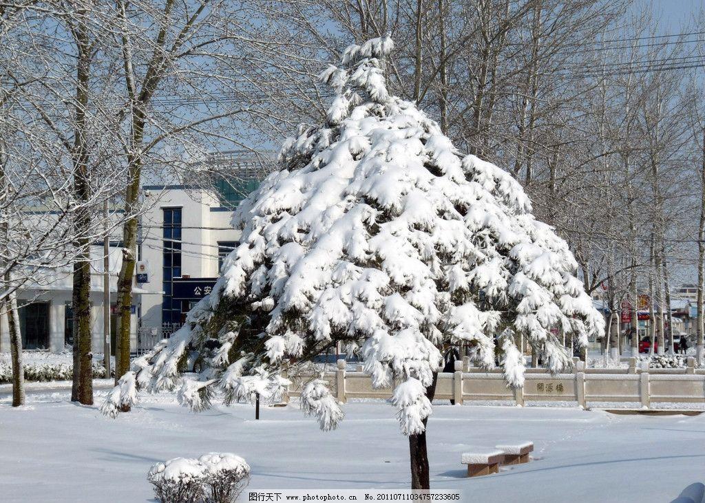 雪景 雪 松树 雪松 白杨树 建筑 高楼 自然风景 摄影 素材 建筑景观