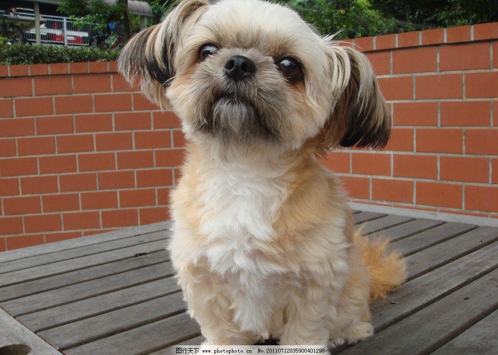 小可爱图片,狗狗 宠物 动物 小狗 大图 摄影-图行天下