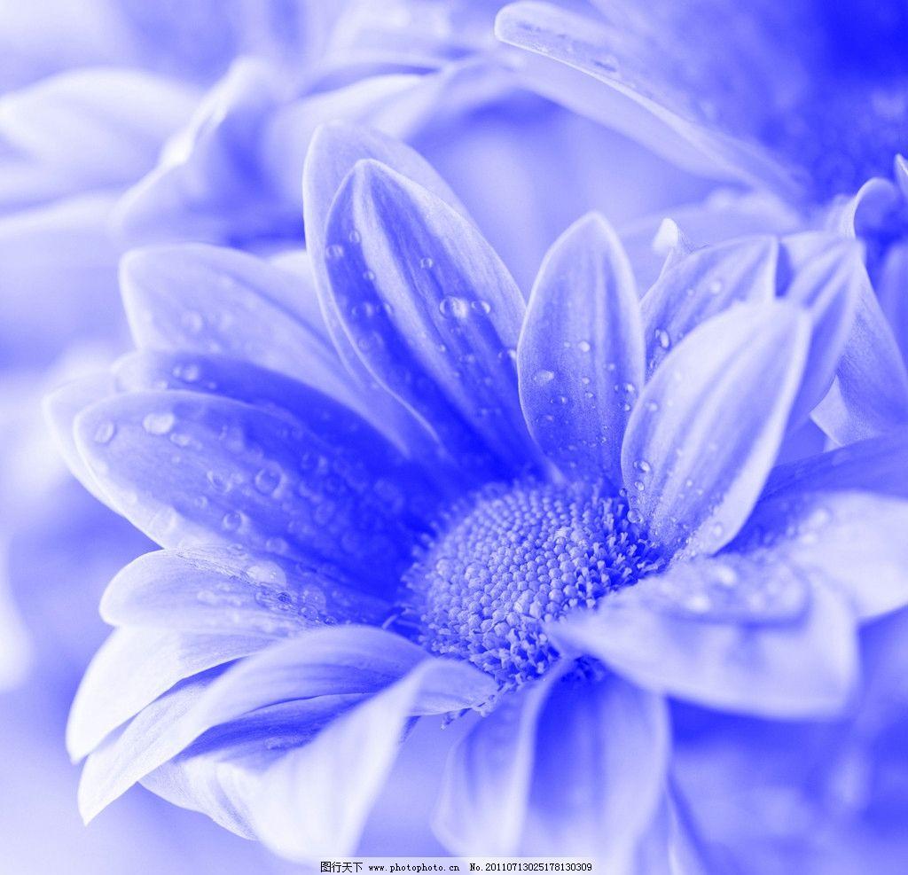 蓝色花朵 花朵 花卉图片 花卉 花 鲜花 花草 花卉壁纸 片 生物世界
