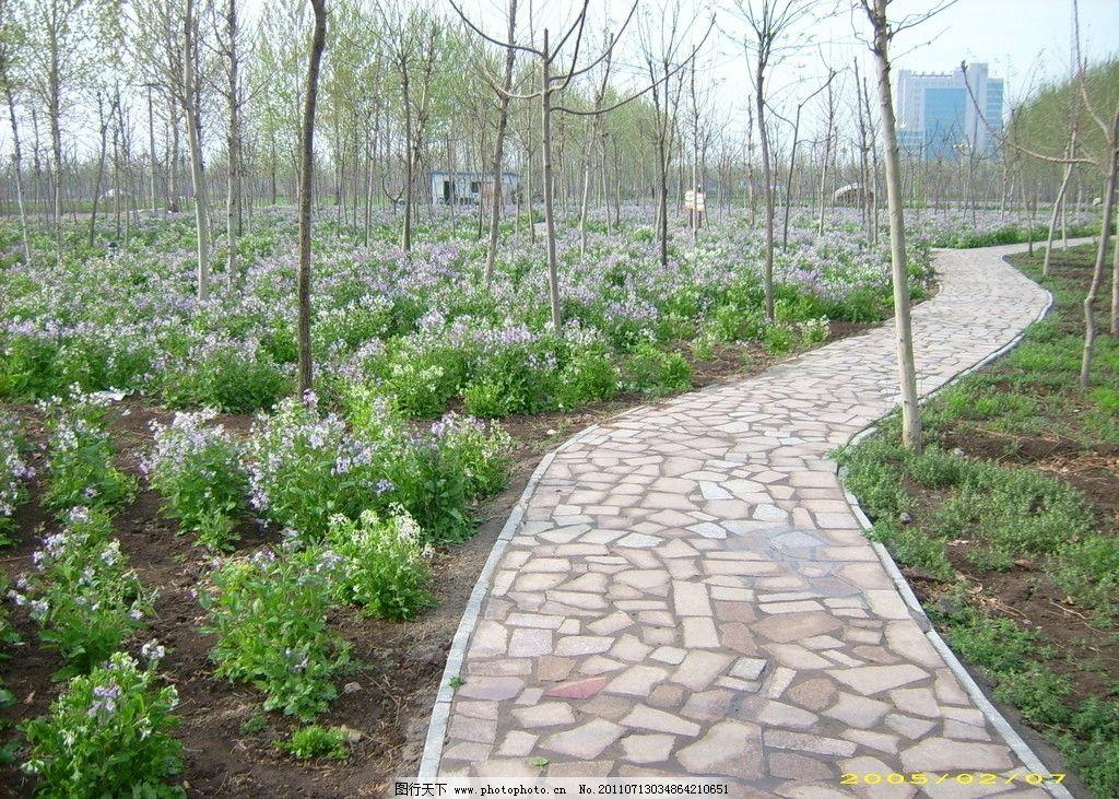 小路 春天 树林 自然风景 自然景观 摄影 96dpi jpg