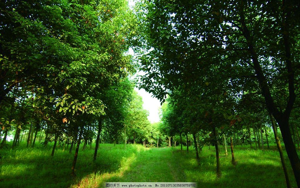 自然森林1366