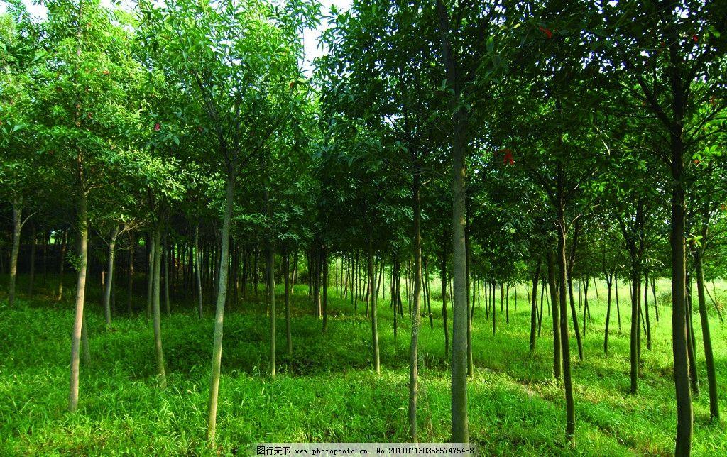 小树林 树木 树林 树叶 草地 自然 绿树 小草 绿色自然 大自然 自然