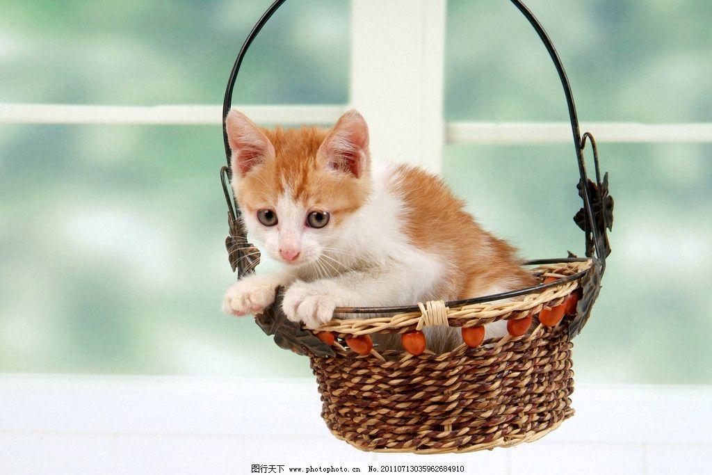 漂亮小猫 美图 插图 桌面 屏保 可爱 可爱小猫 酷帅 人气