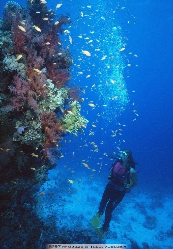 海底潜水 海底世界 珊瑚 海洋生物 潜水 美丽风景 自然风景 自然景观