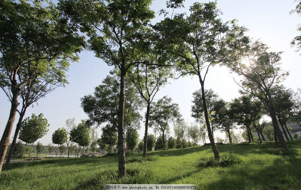 绿地树林 草地 树林 清晨树林 绿色 自然风景 自然景观 摄影 72dpi