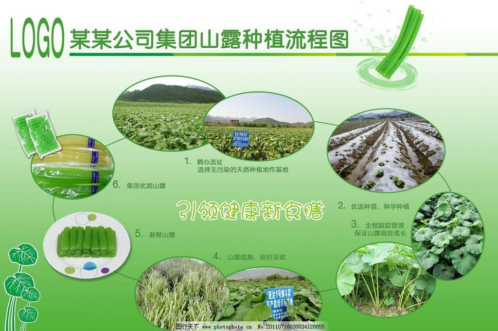 山露种植流程图图片