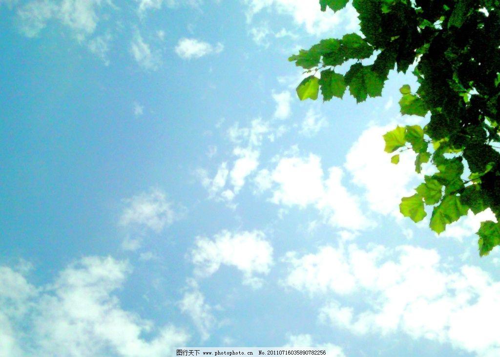 盛夏 蓝天 天空 白云 云朵 树叶 明媚阳光 仰望 摄影