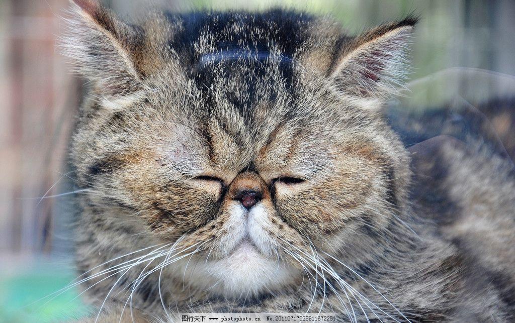 猫猫 猫头 哀伤 困 摄影