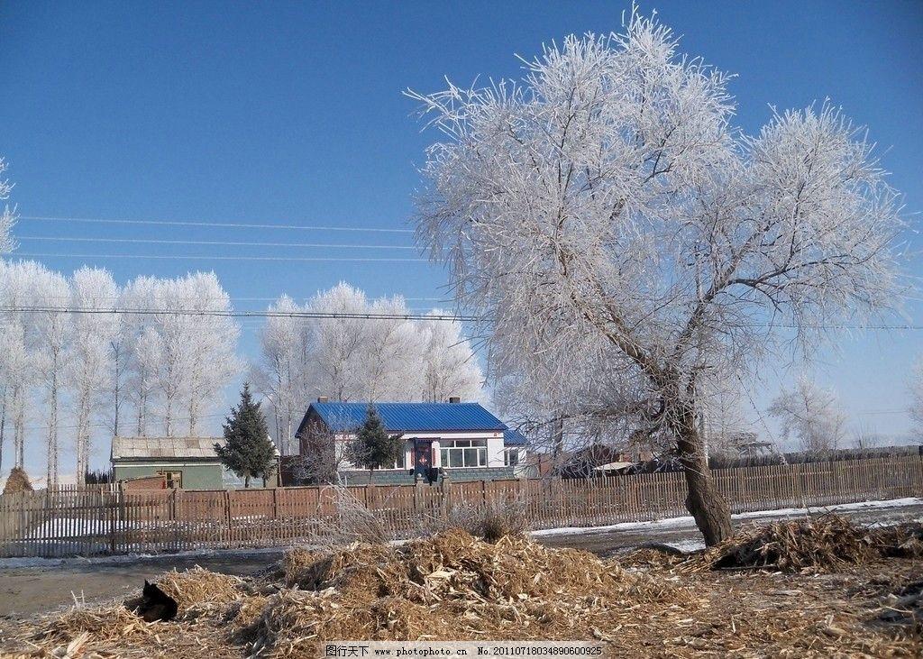 东北土房 东北农村 雾松图片 树林 树木 天空 雪花 飘落 白雪 积雪