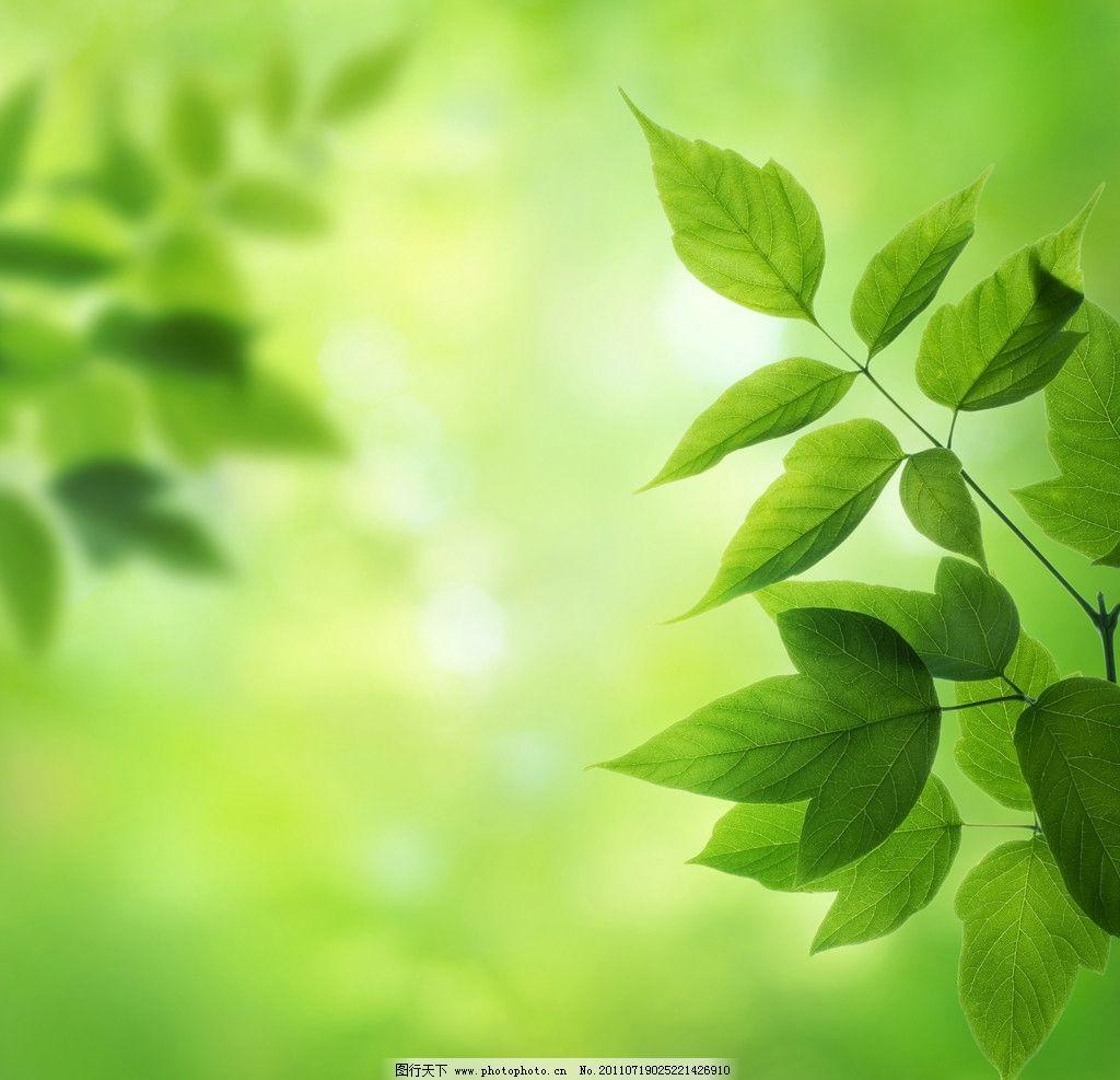 高清绿叶背景图片_树木树叶_生物世界_图行天下图库