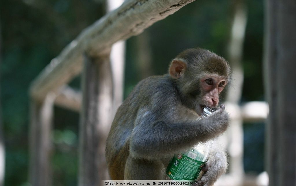 猕猴 动物 保护动物 猴子 玩耍 塑料瓶 摄影