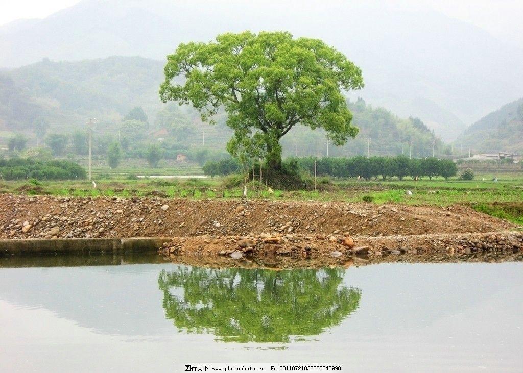 绿树 绿叶 树木 小树 大树 树 倒影 流水 小河 石头 山石 远山 世外