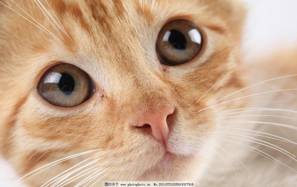 可爱小猫 可爱 猫 动物 猫咪 小猫 萌 高清 家禽家畜 生物世界 摄影