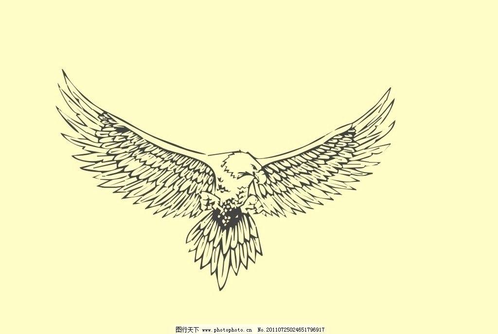 白描鹰 白描图图片