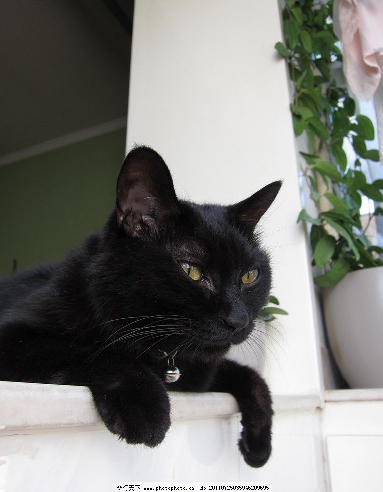 黑猫 宠物猫 顽皮 小动物 可爱 家禽家畜 生物世界 摄影 180dpi jpg