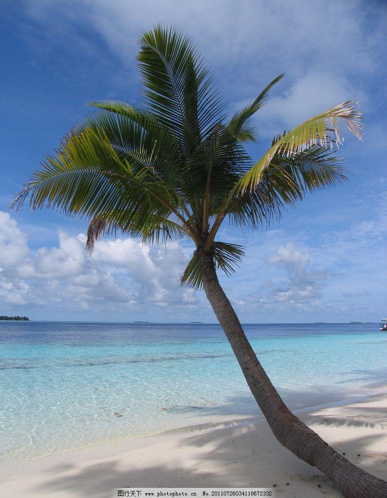 沙滩 海水 阳光 天空 蓝天 海平面 海景 风景 小树 椰树 热带风景