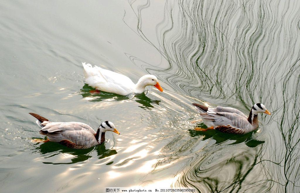 鸭子黏土制作步骤