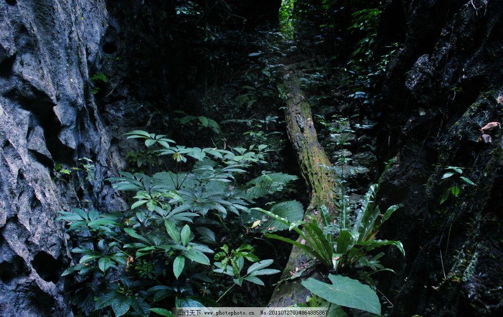 近景 雨林中的植被 自然风景 森林 热带 雨林 丛林 热带植物 幽暗森林