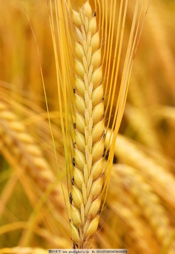 立体麦穗手工制作步骤