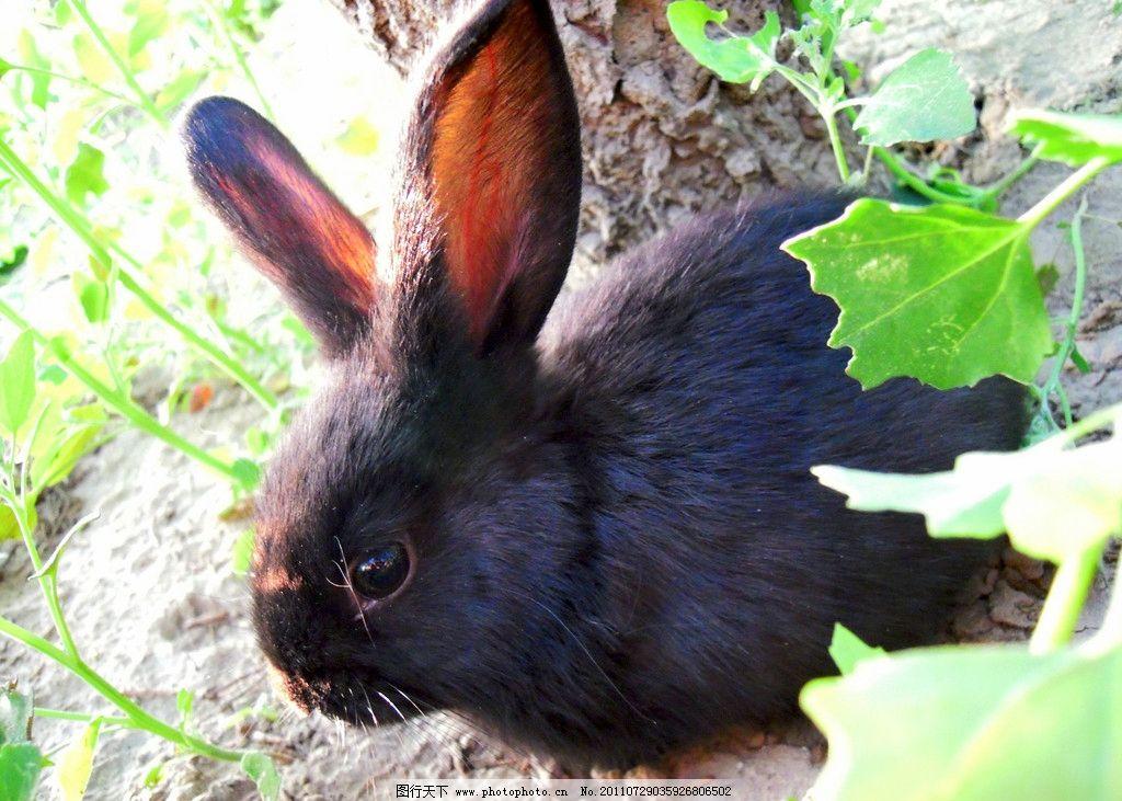 黑兔 兔子 可爱的小兔 大树 叶子 动物世界 家禽家畜 生物世界 摄影