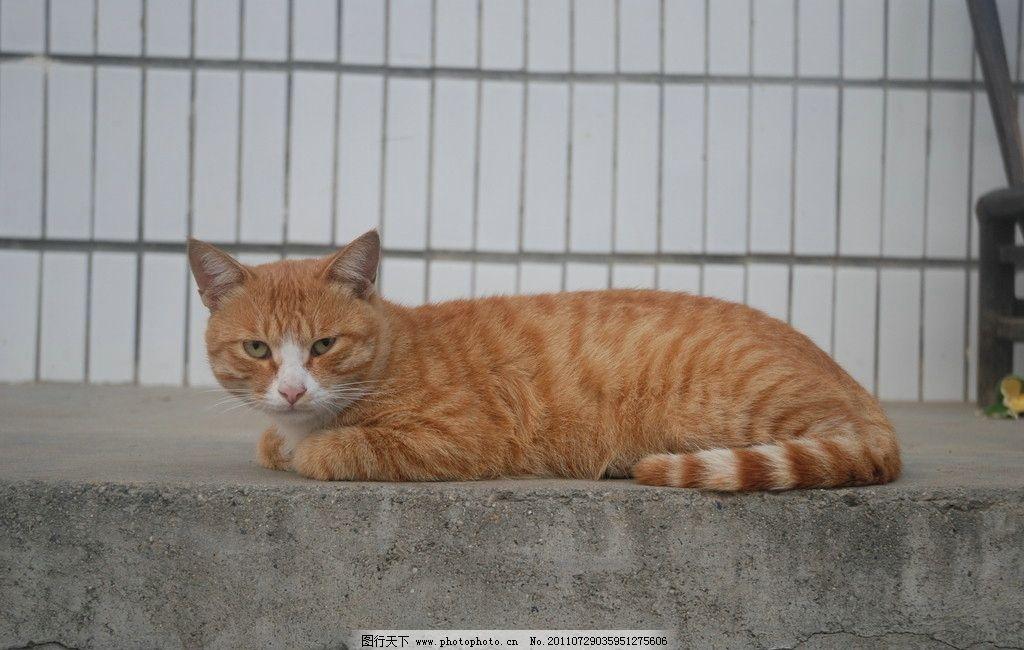 壁纸 动物 猫 猫科 猫咪 小猫 桌面 1024_650