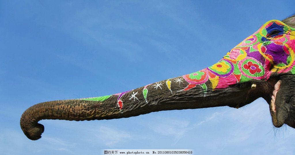 象鼻 大象 传统 装饰 花布 蜷曲 天空 国宝 泰国 旅游 野生动物世界