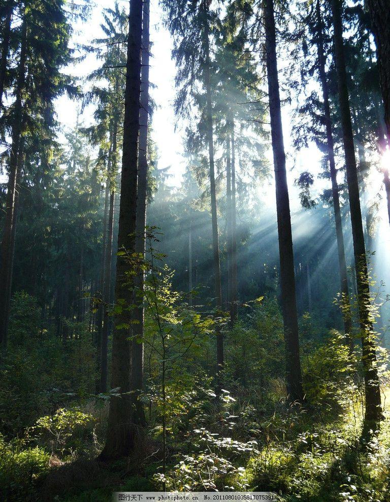 自然风光 风光摄影 森林景色 树林 树木 美丽风光 美丽风景 风光图片
