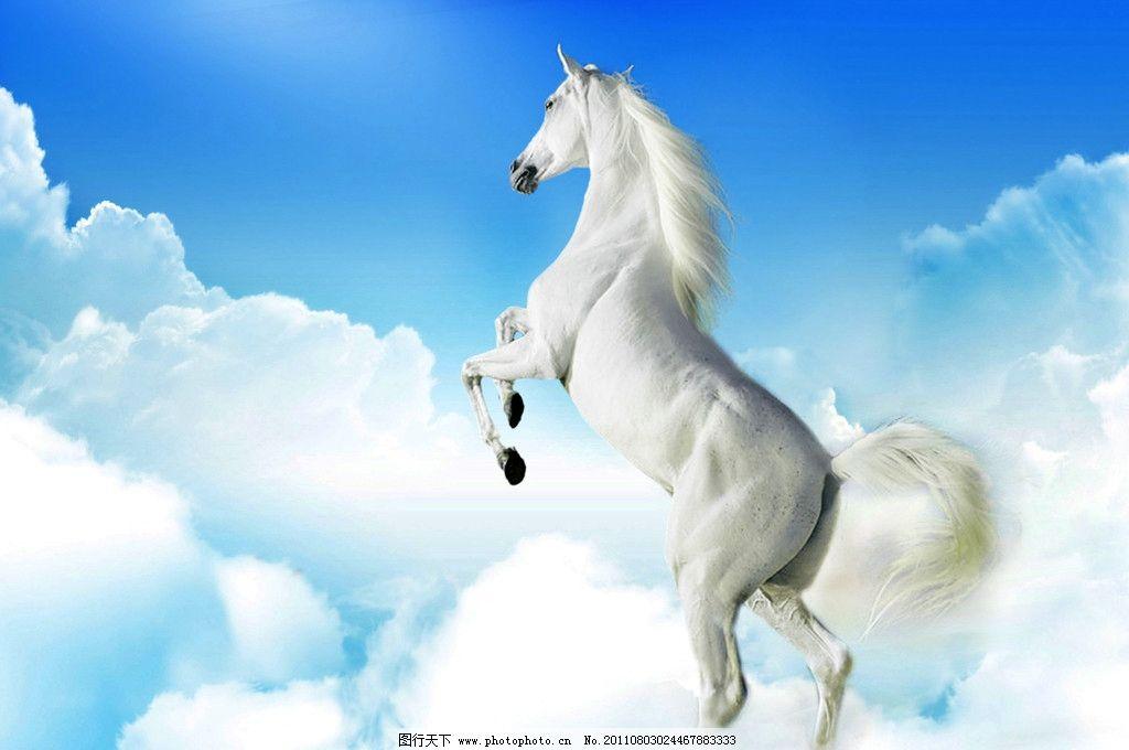 云中的俊马 俊马 野生动物 生物世界 设计 300dpi jpg