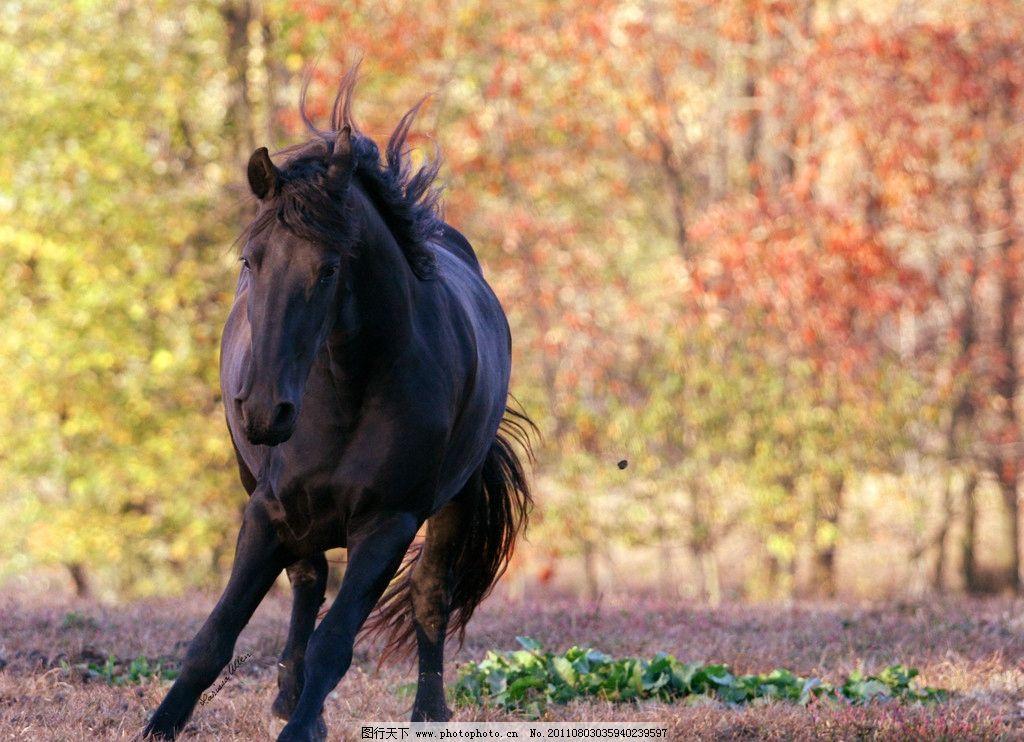 奔跑的骏马 动物摄影 动物图片