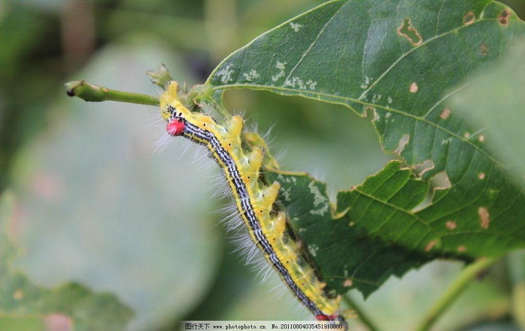 毛毛虫 彩色虫 昆虫 生物世界 摄影 72dpi jpg