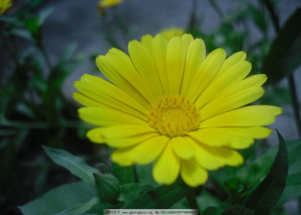 黄色-黄色花图片