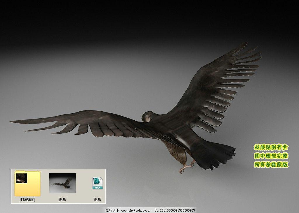 雄鹰 动物 飞行类 生物 飞禽 3d模型 三维模型 三维建模 3d建模 动物