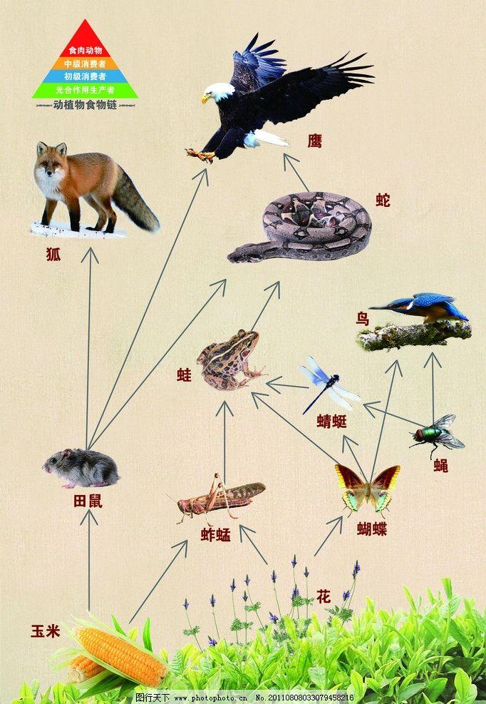 动植物食物链图片
